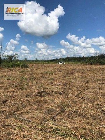 Fazenda à venda, com 310 hectares no município de Porto Velho/RO - Foto 7