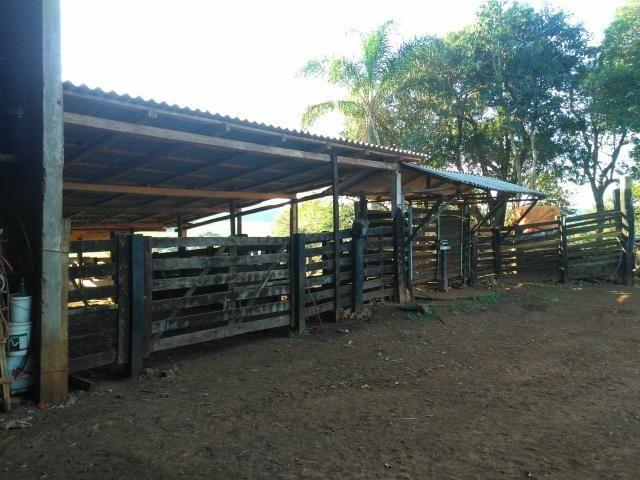 Fazenda de 66 Alqueires .50 Alqueires Mecanizados - 17 KM de Cantagalo PR - Foto 19