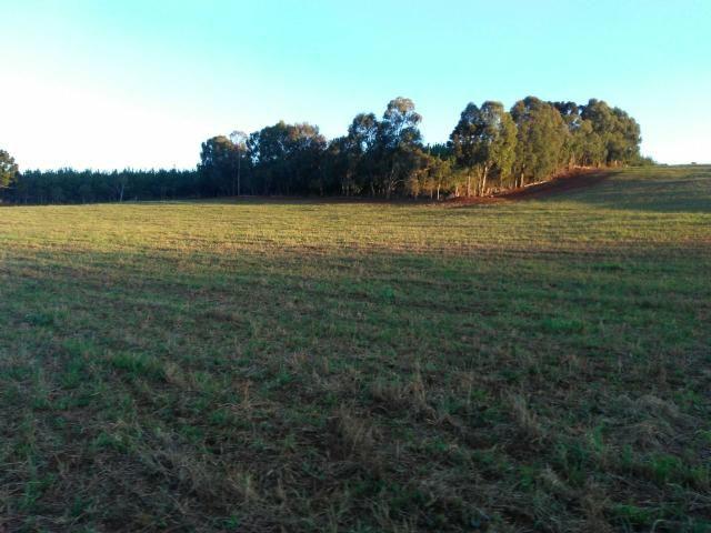 Fazenda de 66 Alqueires .50 Alqueires Mecanizados - 17 KM de Cantagalo PR - Foto 3
