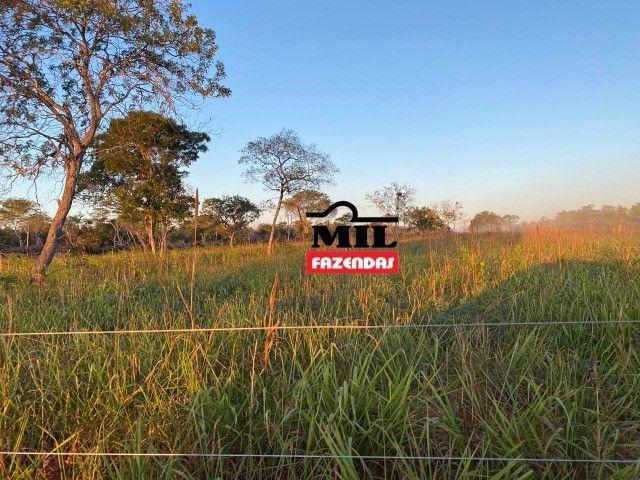 Fazenda 236 alqueires ( 1142 hectares ) Jaú-TO - Foto 14