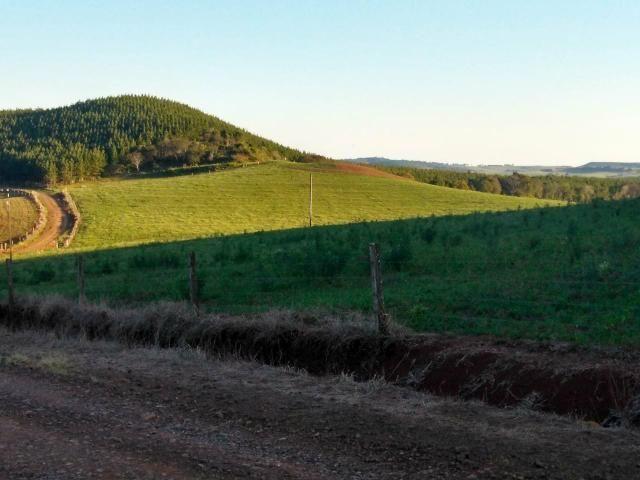 Fazenda de 66 Alqueires .50 Alqueires Mecanizados - 17 KM de Cantagalo PR - Foto 2