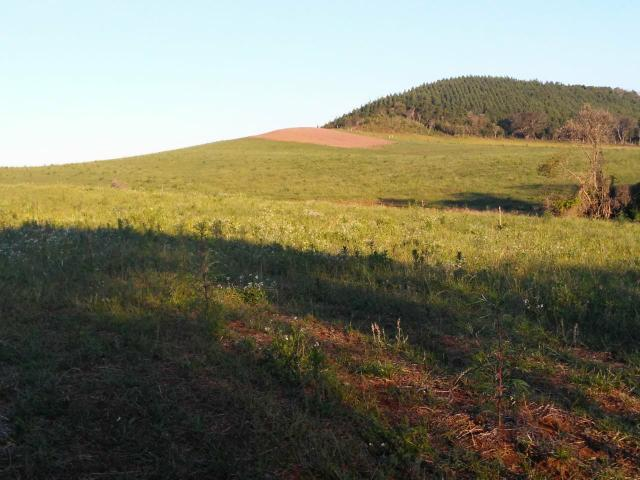 Fazenda de 66 Alqueires .50 Alqueires Mecanizados - 17 KM de Cantagalo PR - Foto 9