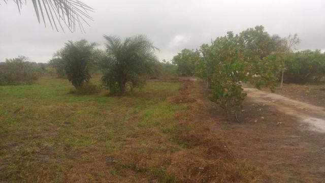 Chácara com casa árvores frutíferas 8.712 m² - Foto 3
