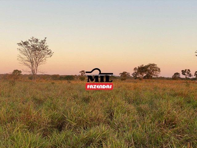 Fazenda 236 alqueires ( 1142 hectares ) Jaú-TO - Foto 19