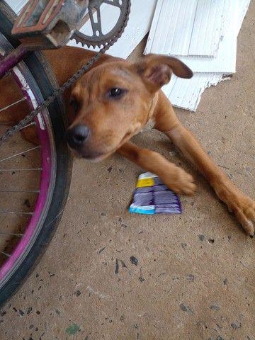 Ajudem o cachorro da minha filha  - Foto 4