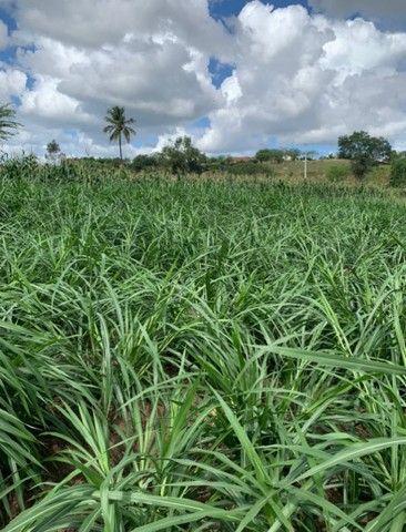Sitio/Fazenda em Passira, Pernambuco. 12,7 hectares. - Foto 10