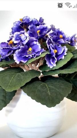 Presciso de flor violeta.
