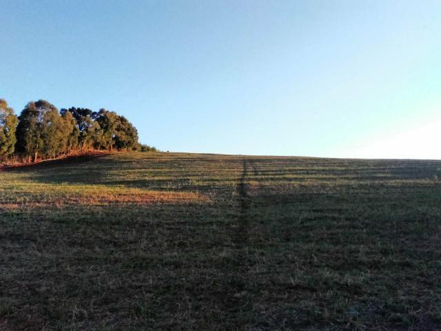 Fazenda de 66 Alqueires .50 Alqueires Mecanizados - 17 KM de Cantagalo PR - Foto 4