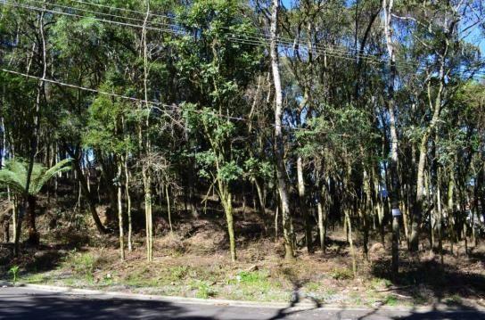 Terreno residencial à venda, floresta, gramado.