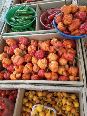Pimentas Selecionadas e sementes - Foto 3