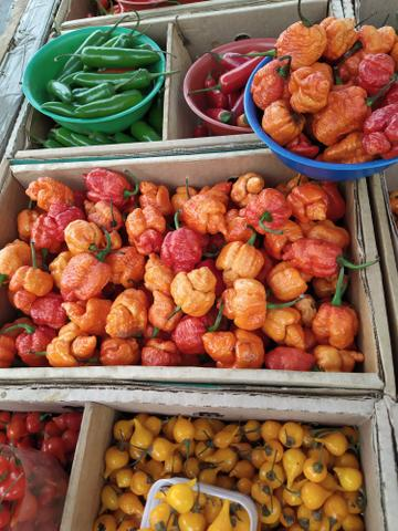 Pimentas e Sementes - Foto 3