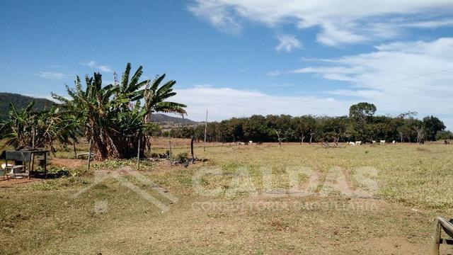 Fazenda de 10 alqueires para pecuária na região de Caldas Novas GO - Foto 7