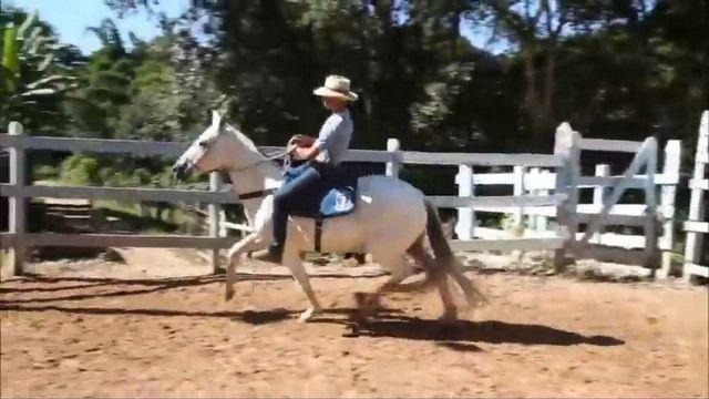 Égua mangalarga Machador m prenha do Delete Caxambuense Muito top  60 x imperdível!!