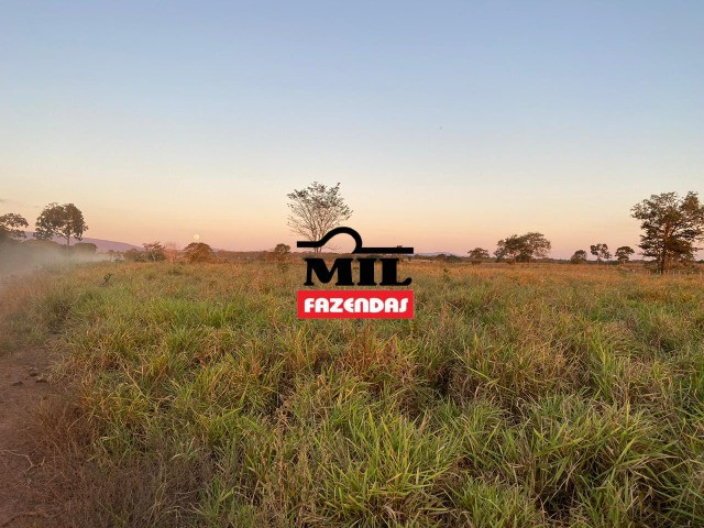 Fazenda 236 alqueires ( 1142 hectares ) Jaú-TO - Foto 10