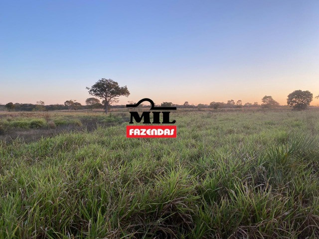 Fazenda 236 alqueires ( 1142 hectares ) Jaú-TO - Foto 3