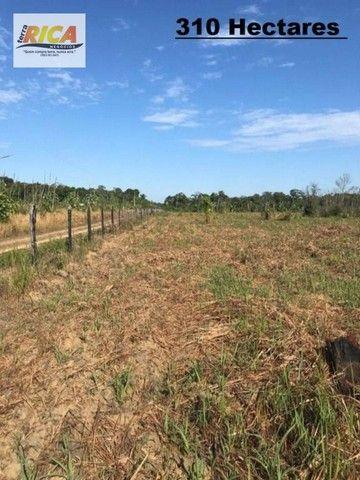 Fazenda à venda, com 310 hectares no município de Porto Velho/RO