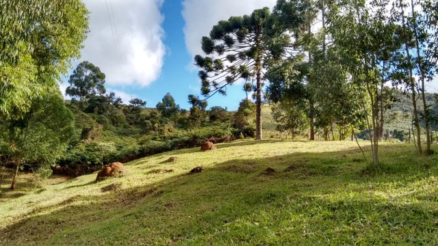 Vendo sítio com 12 hectares (120000m²) localizado em Carvalhos-MG - Foto 13