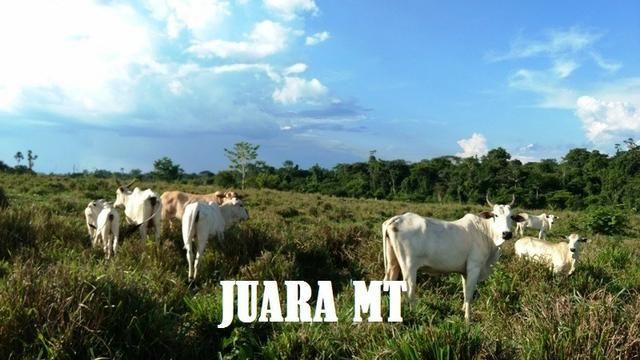Fazenda 1.795 hectares com 1.210 JuaraMT