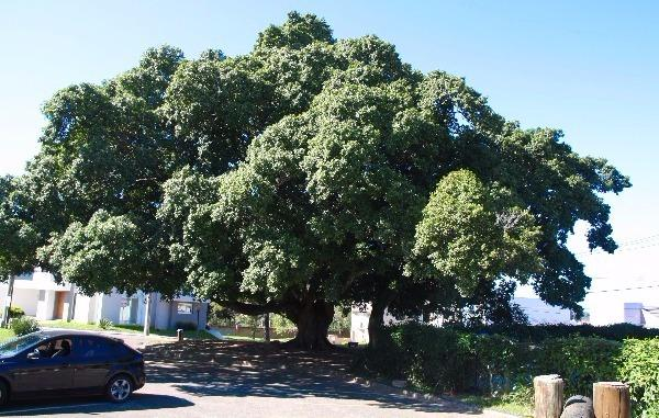 Terreno à venda em Aberta dos morros, Porto alegre cod:MI17172 - Foto 17