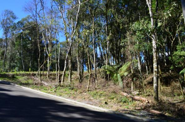 Terreno residencial à venda, floresta, gramado. - Foto 4