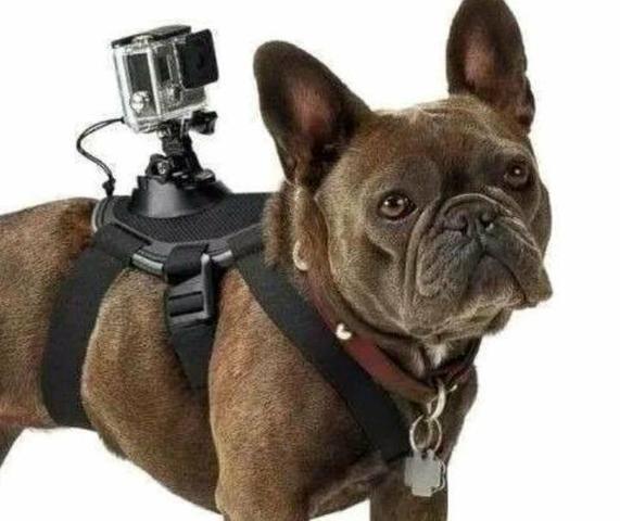 Suporte para por gopro no cachorro /dog tamanho ajustável go pro - Foto 4