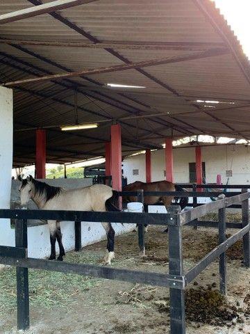 Sitio/Fazenda em Passira, Pernambuco. 12,7 hectares. - Foto 13