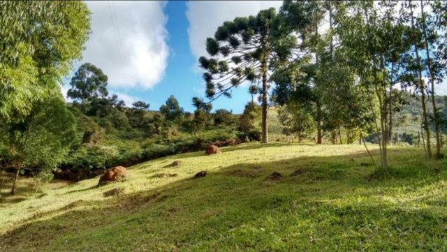 Vendo sítio com 12 hectares (120000m²) localizado em Carvalhos-MG