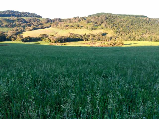 Fazenda de 66 Alqueires .50 Alqueires Mecanizados - 17 KM de Cantagalo PR - Foto 10