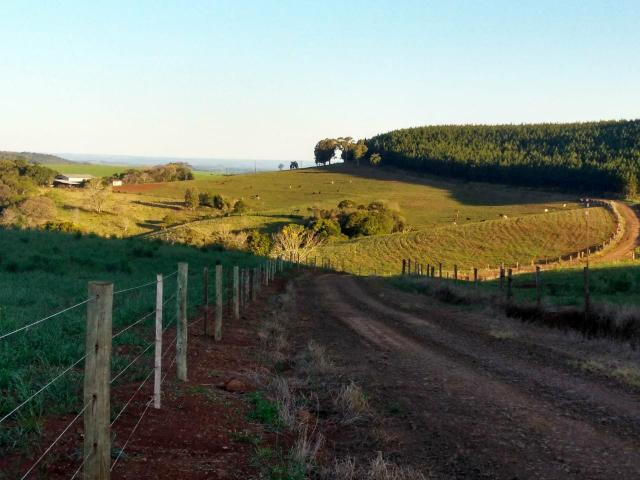 Fazenda de 66 Alqueires .50 Alqueires Mecanizados - 17 KM de Cantagalo PR