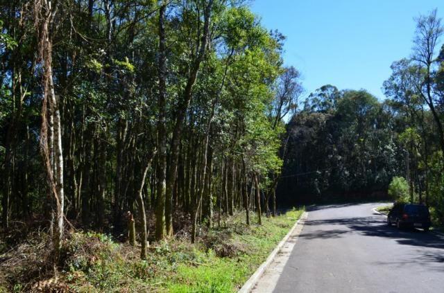 Terreno residencial à venda, floresta, gramado. - Foto 7