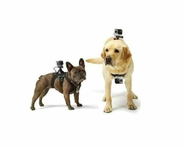 Suporte para por gopro no cachorro /dog tamanho ajustável go pro - Foto 3