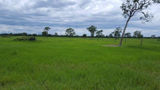Fazenda Santo Antonio Leverger 870 Hectares