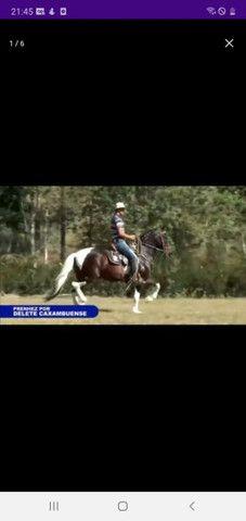 Égua mangalarga Machador m prenha do Delete Caxambuense Muito top  60 x imperdível!! - Foto 2