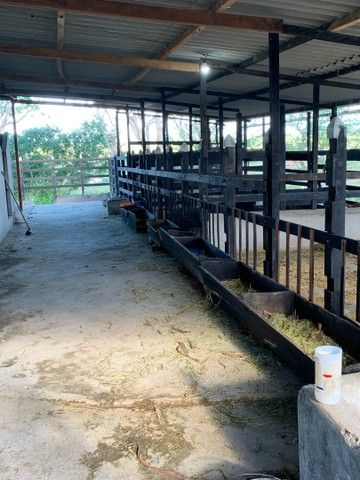 Sitio/Fazenda em Passira, Pernambuco. 12,7 hectares. - Foto 18
