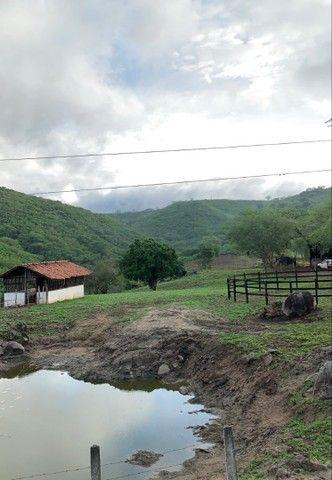 Sitio/Fazenda em Passira, Pernambuco. 12,7 hectares. - Foto 5