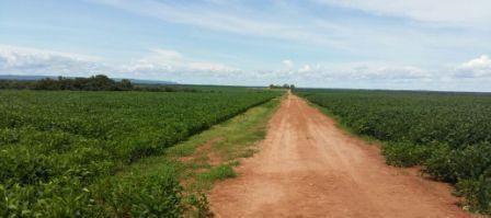 Fazenda Água Boa - MT - Código 11830