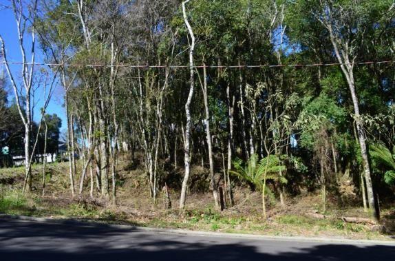 Terreno residencial à venda, floresta, gramado. - Foto 2