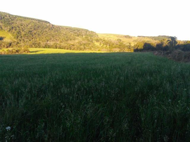 Fazenda de 66 Alqueires .50 Alqueires Mecanizados - 17 KM de Cantagalo PR - Foto 7
