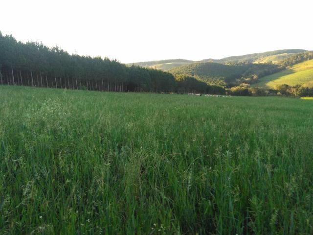 Fazenda de 66 Alqueires .50 Alqueires Mecanizados - 17 KM de Cantagalo PR - Foto 6