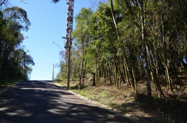 Terreno residencial à venda, floresta, gramado. - Foto 6