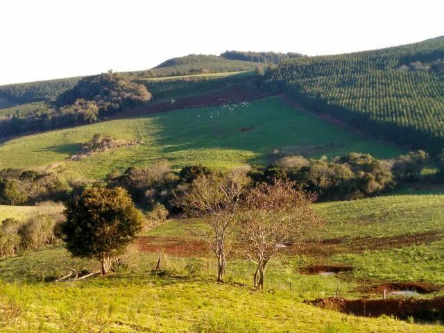 Fazenda de 66 Alqueires .50 Alqueires Mecanizados - 17 KM de Cantagalo PR - Foto 11