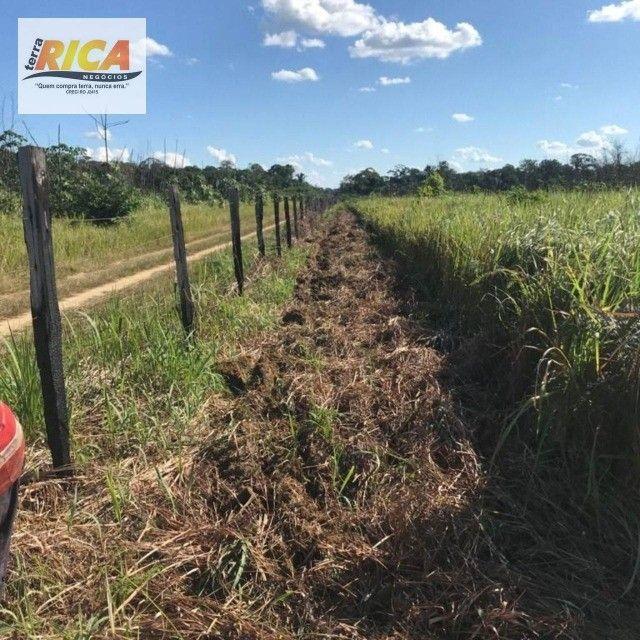 Fazenda à venda, com 310 hectares no município de Porto Velho/RO - Foto 2