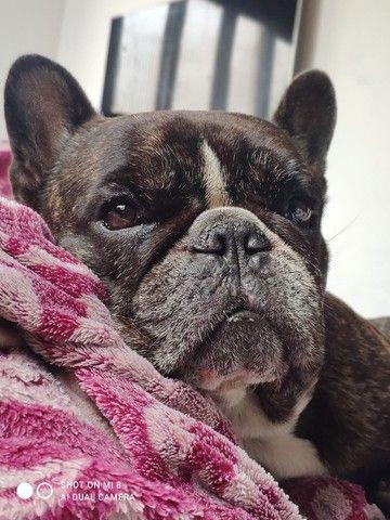 Bulldog Francês para cobertura  - Foto 3