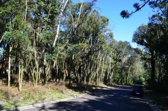 Terreno residencial à venda, floresta, gramado. - Foto 3