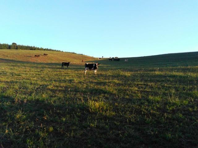 Fazenda de 66 Alqueires .50 Alqueires Mecanizados - 17 KM de Cantagalo PR - Foto 5