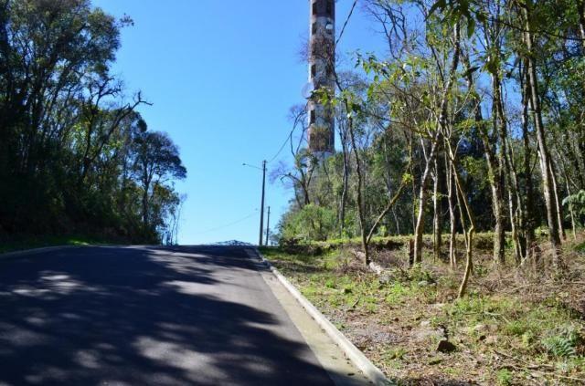 Terreno residencial à venda, floresta, gramado. - Foto 5