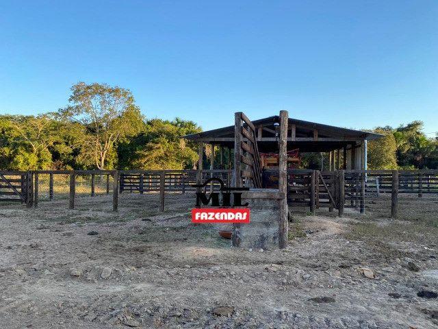 Fazenda 236 alqueires ( 1142 hectares ) Jaú-TO - Foto 17