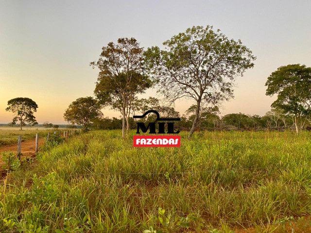 Fazenda 236 alqueires ( 1142 hectares ) Jaú-TO - Foto 9