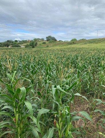 Sitio/Fazenda em Passira, Pernambuco. 12,7 hectares. - Foto 9