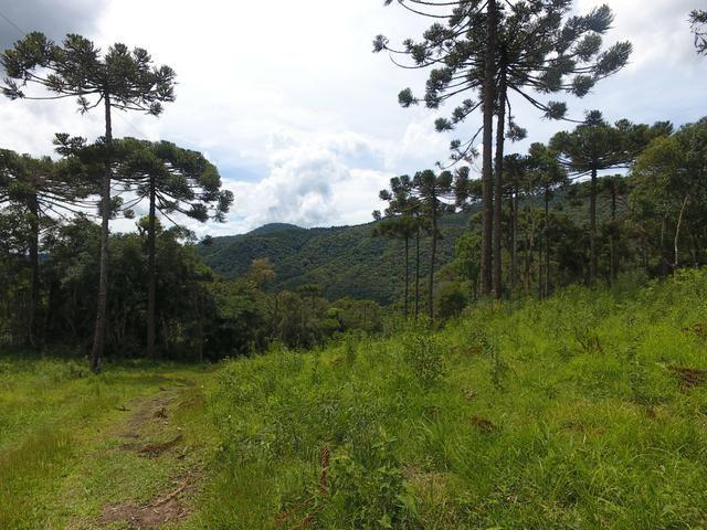 Sítio em Urubici/chácara em Urubici/área rural - Foto 6